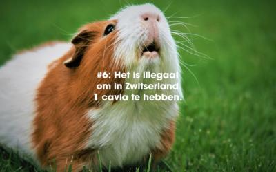 12 bizarre feitjes over Zwitserland